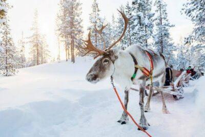 Rituel Nordique - Evasion Boreale